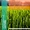 OSC - Ирригационные системы и системы капельного орошения #1679673