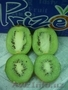 фрукты для оптовиков