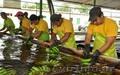 бананы производство и продажа