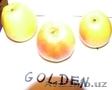 Продам высококачественные яблоки.Польша